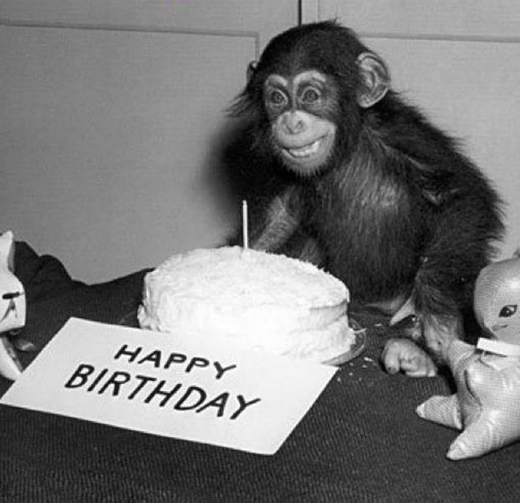monkeybirthday